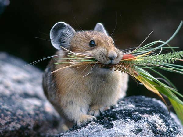 Mơ thấy chuột nên đánh con số nào - Giải mã giấc mơ thấy chuột