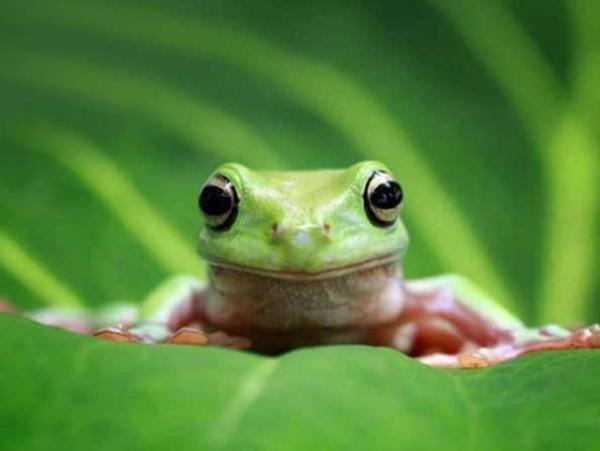 Nằm mơ thấy con ếch chơi lô đề con gì may mắn?