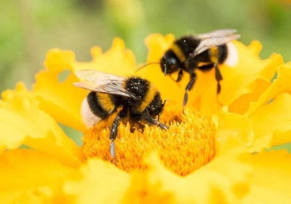 Giải mã ý nghĩa giấc mơ thấy con ong là điềm báo gì