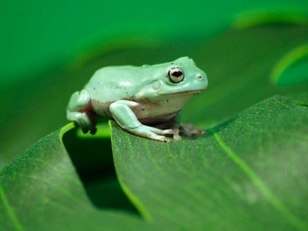 Nằm mơ thấy con ếch nên đánh số mấy? đánh con gì