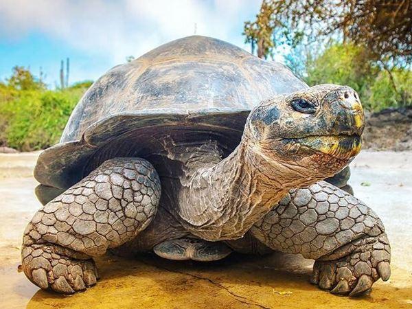 Mơ thấy rùa là dự cảm tốt hay xấu – Rùa là số mấy?