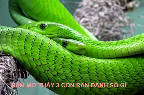 Nằm mơ thấy 3 con rắn đánh con gì đánh số mấy