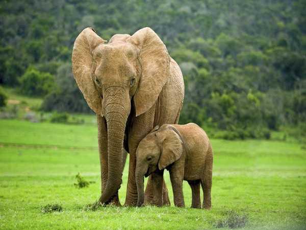 Nằm mơ thấy voi đánh con gì ăn chắc, có điềm báo gì