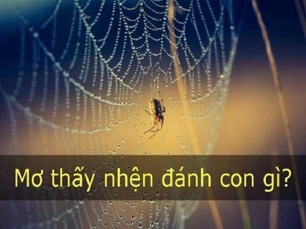 Mơ thấy nhện điềm báo lành hay dữ?