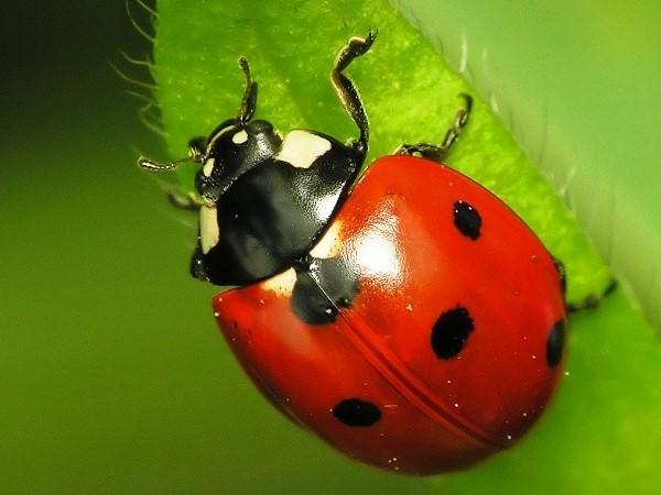 Nằm mơ thấy bọ cánh cứng nên đánh con gì đánh số mấy