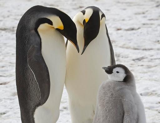 Giải mã giấc mơ thấy chim cánh cụt là điềm báo gì
